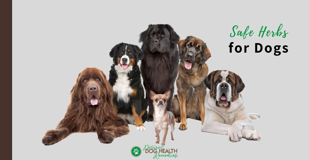 Safe Herbs for Dogs