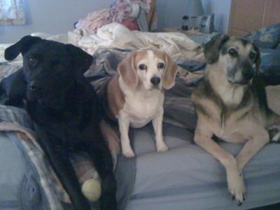 Buddy, Baby & Scooby (l-r)