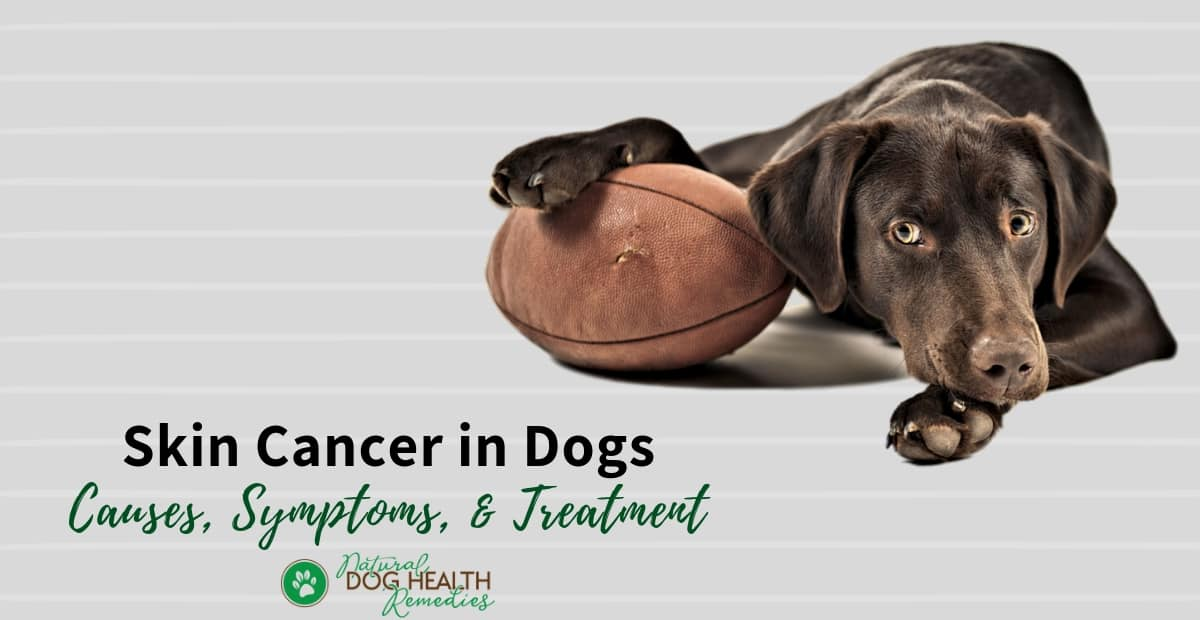 Skin Cancer In Dogs Types Of Skin Tumors Symptoms Treatment