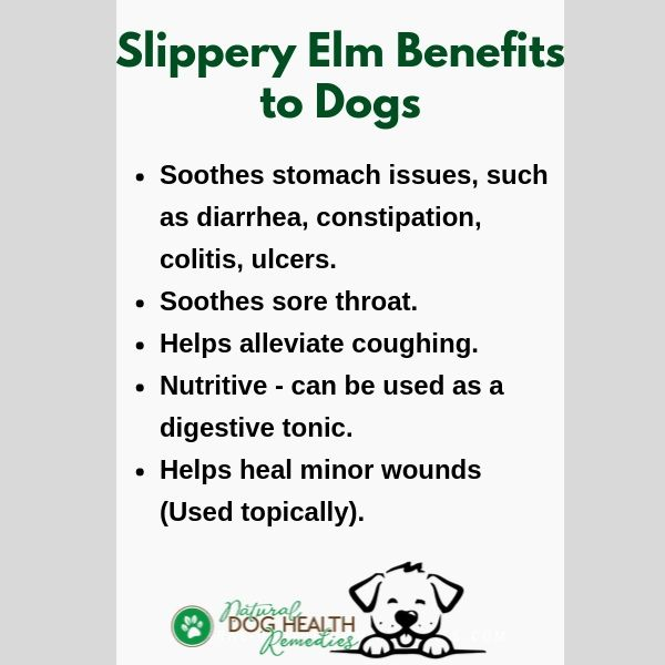 Benefits of Slippery Elm to Dogs