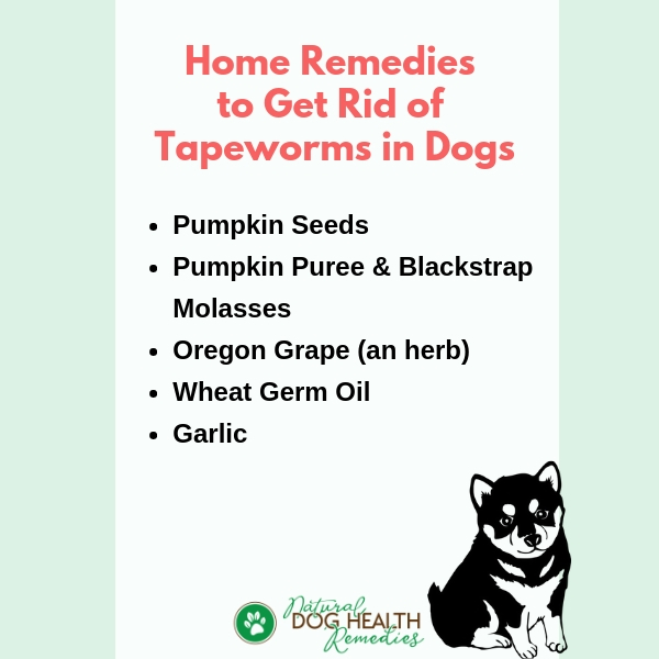 Get Rid of Tapeworms in Dogs Naturally