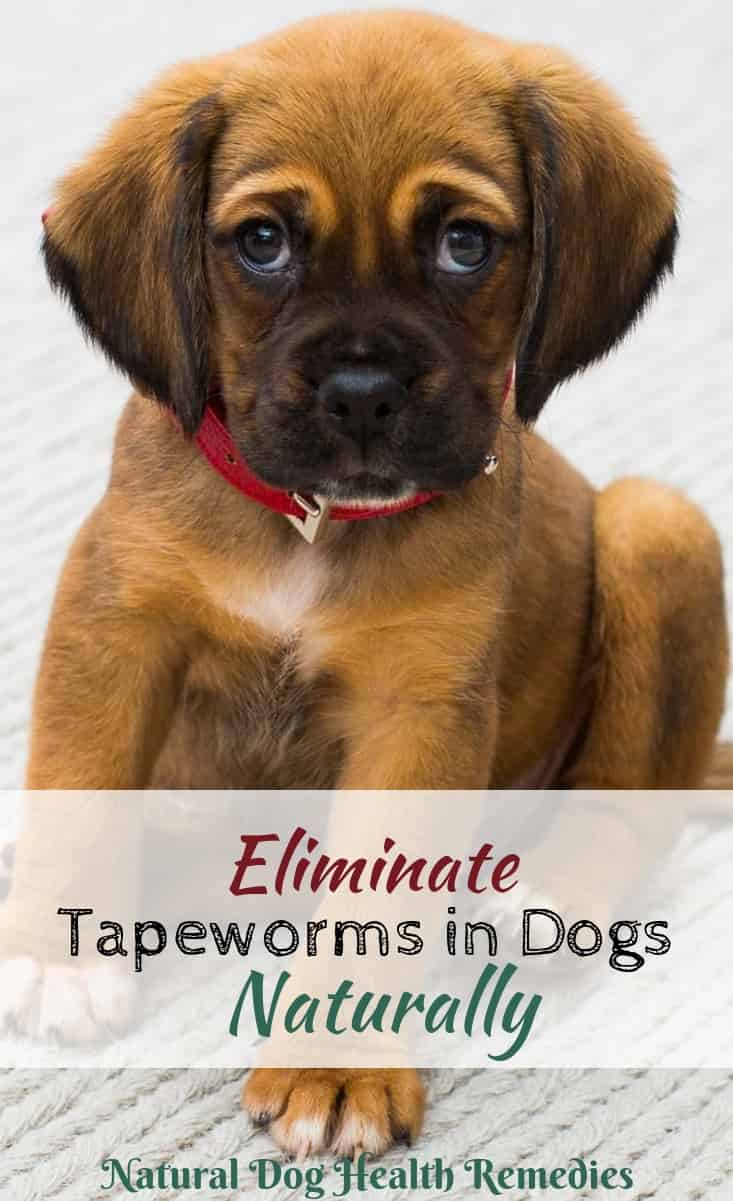 Natural Remedies for Tapeworms in Dogs