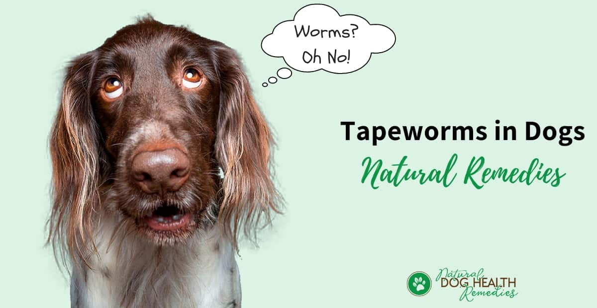 Tapeworms in Dogs