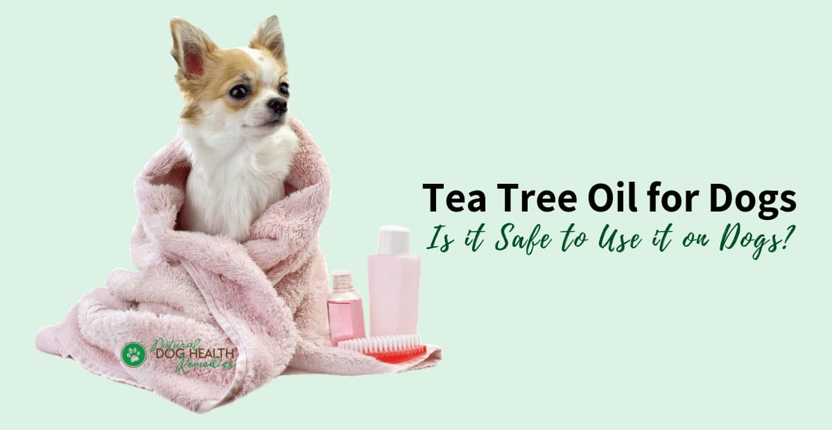 Tea Tree Oil for Dogs