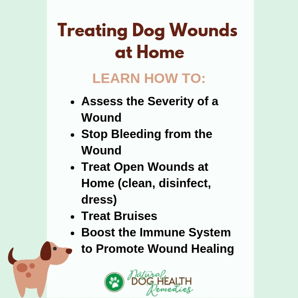 How to Treat Dog Wounds & Stop Bleeding | Natural Home Remedies