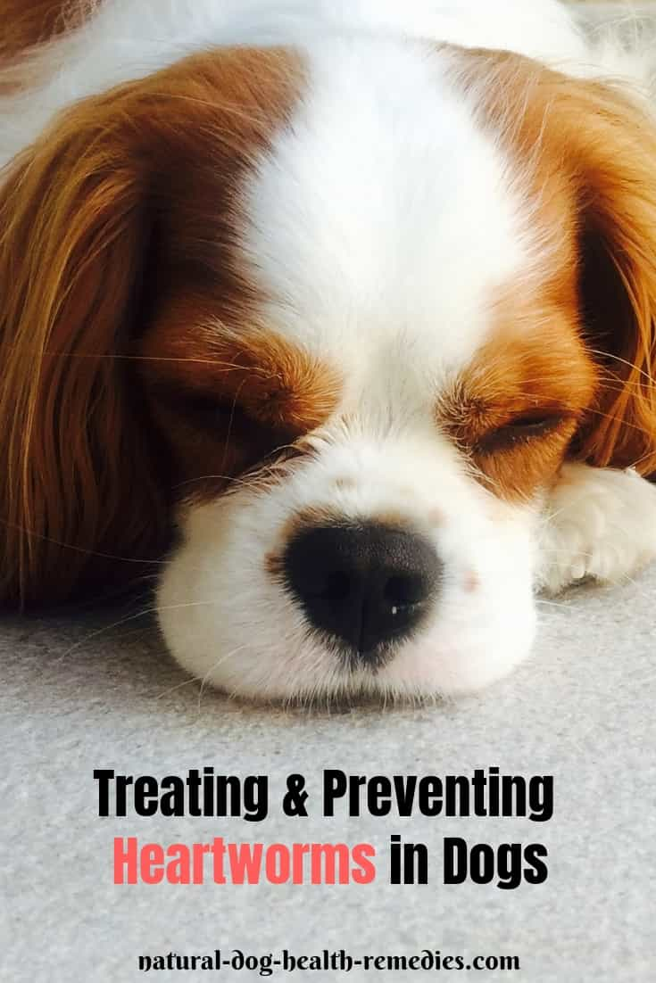 Treating Heartworm in Dogs