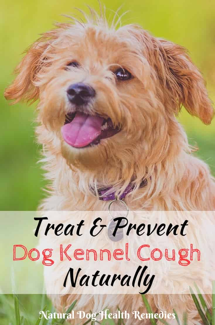 Treating Kennel Cough In Dogs At Home Prevention