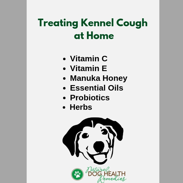 How To Treat Kennel Cough At Home