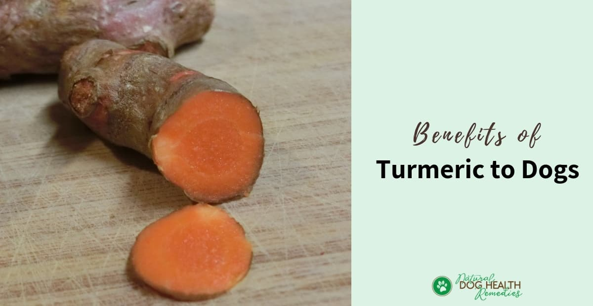 Turmeric Benefits to Dogs