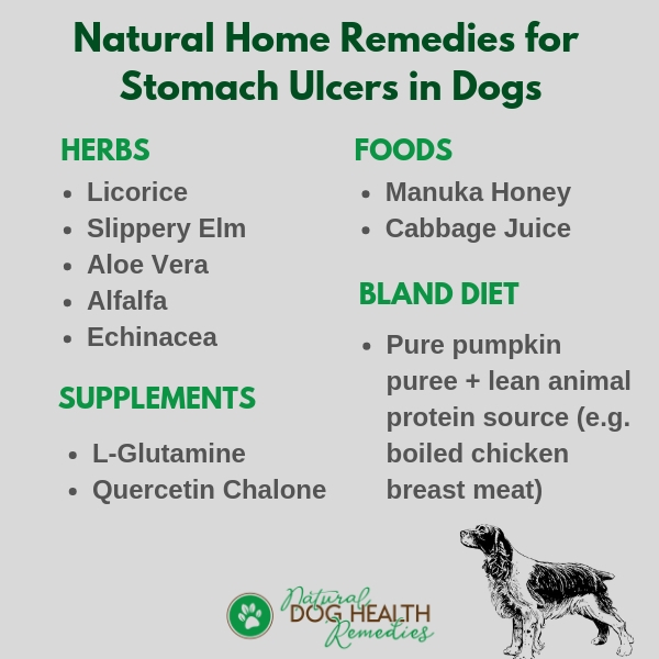 Natural Remedies for Stomach Ulcers in Dogs