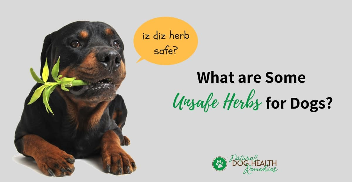 Unsafe Herbs for Pets