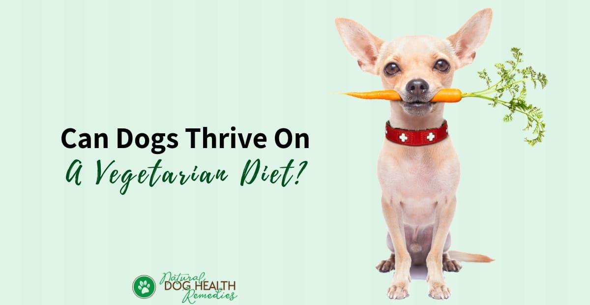 Vegetarian Diet for Dogs