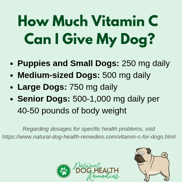 How Much Vitamin C Can I Give to My Dog