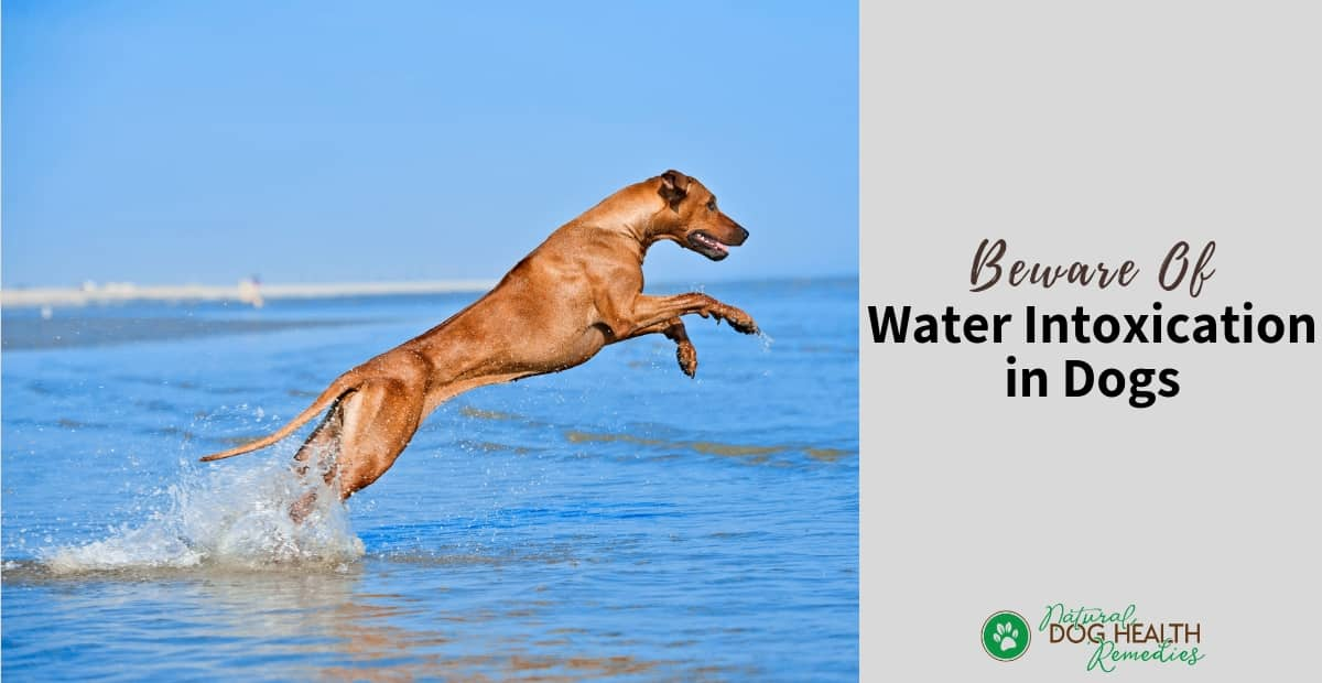 Water Intoxication in Dogs