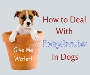 Dog Dehydration