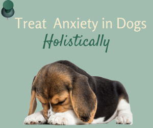 Holistic Ways To Treat Cancer In Dogs