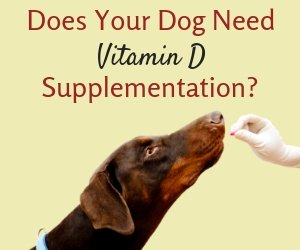 Vitamin D for Dogs