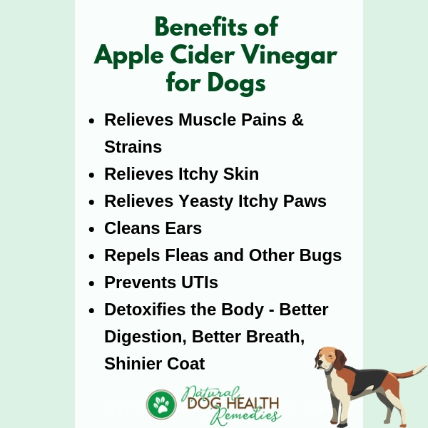 Benefits of Apple Cider Vinegar for Dogs