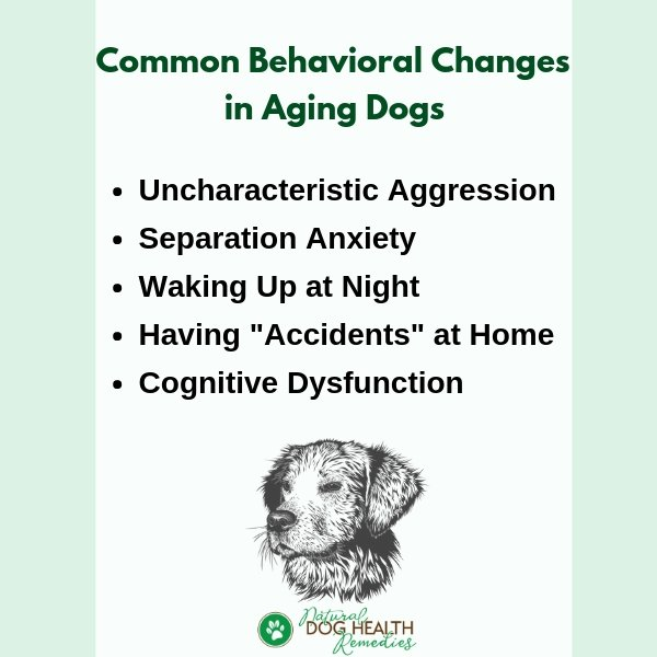 Old Dog Behavior Changes