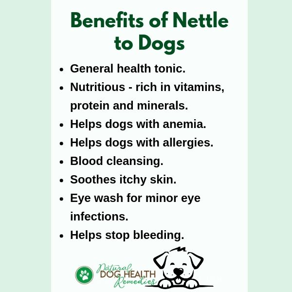 Benefits of Nettle to Dogs
