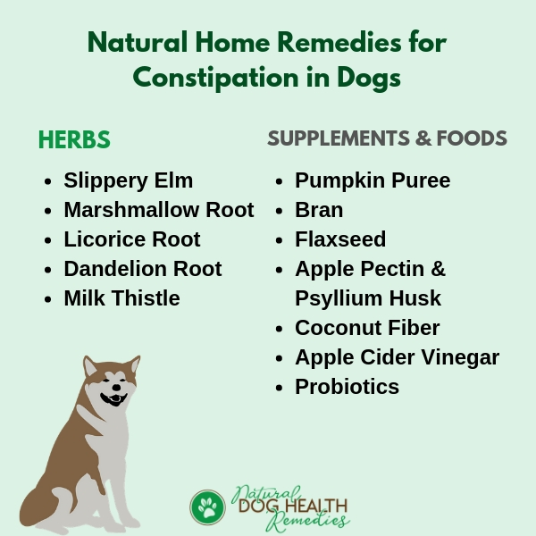Home Remedies for Dog Constipation