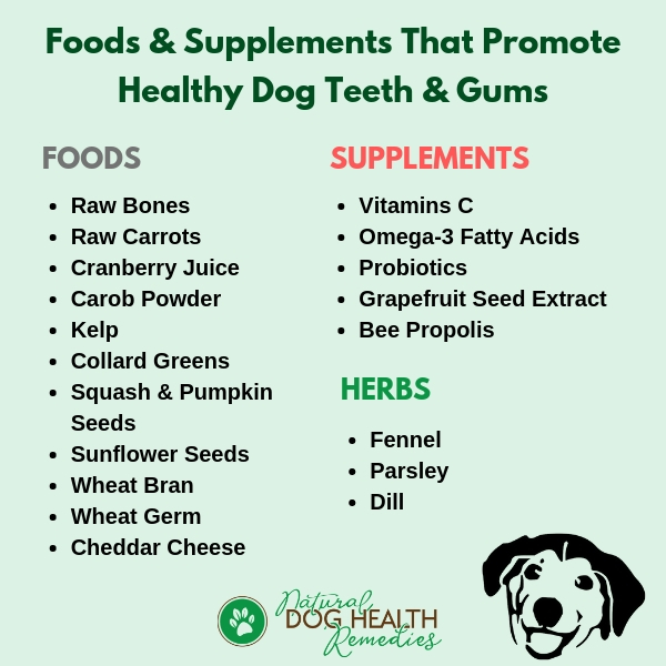 Foods & Supplements for Canine Dental Care