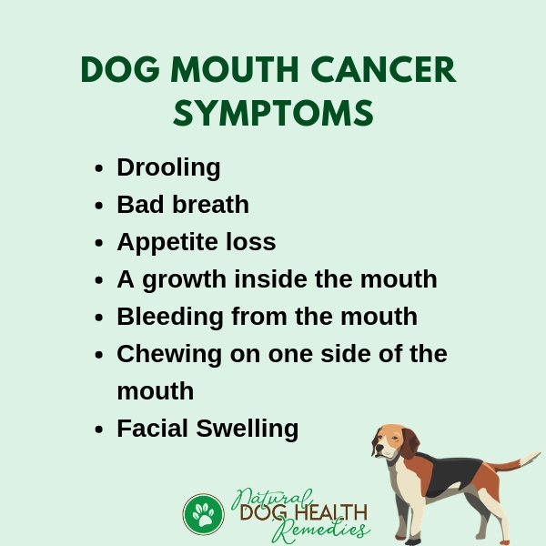 Canine Mouth Cancer Symptoms
