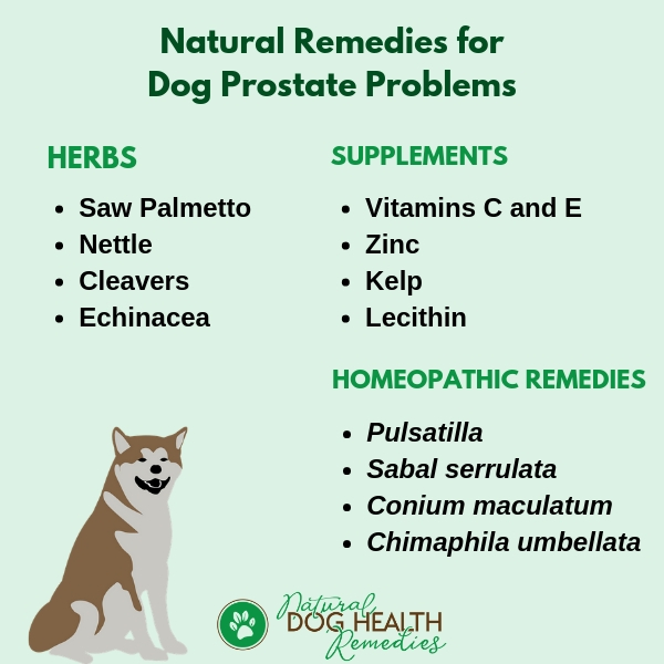 Natural Remedies for Dog Prostate Enlargement