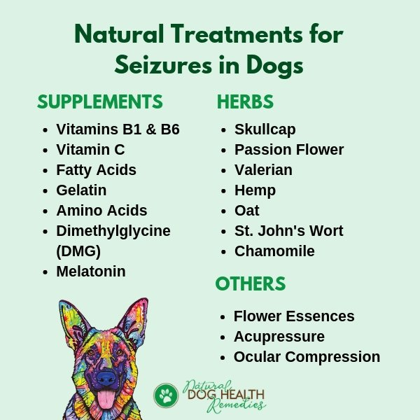 Home Treatments for Canine Seizures