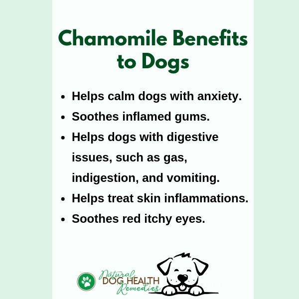 Benefits of Chamomile to Dogs