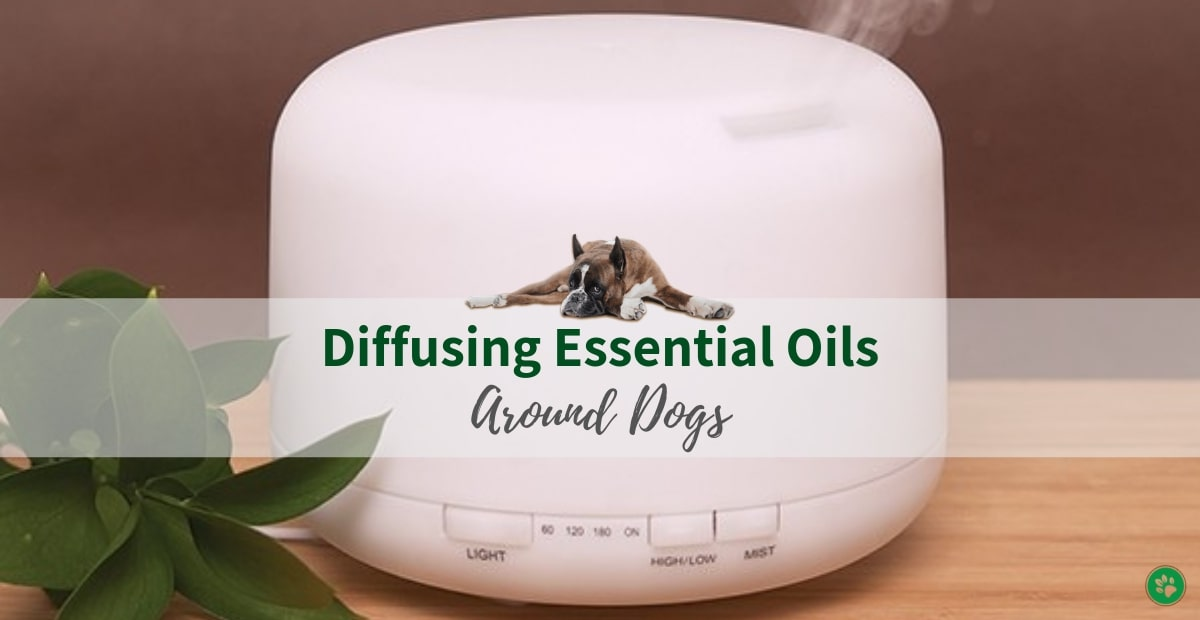 Diffusing Essential Oils Safely Around Dogs