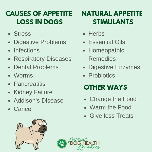 Causes of Loss of Appetite in Dogs