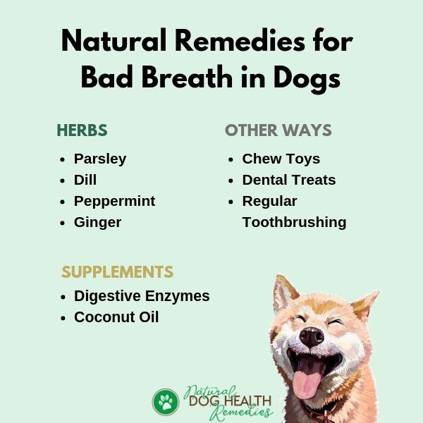 Natural Remedies for Dog Bad Breath