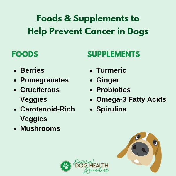 A List of Dog Cancer Fighting Foods