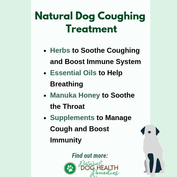 Natural Dog Cough Home Remedies