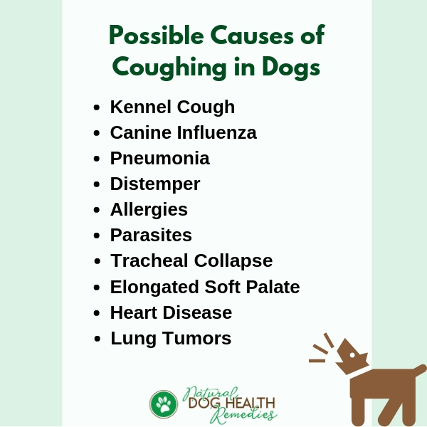 Causes of Coughing in Dogs