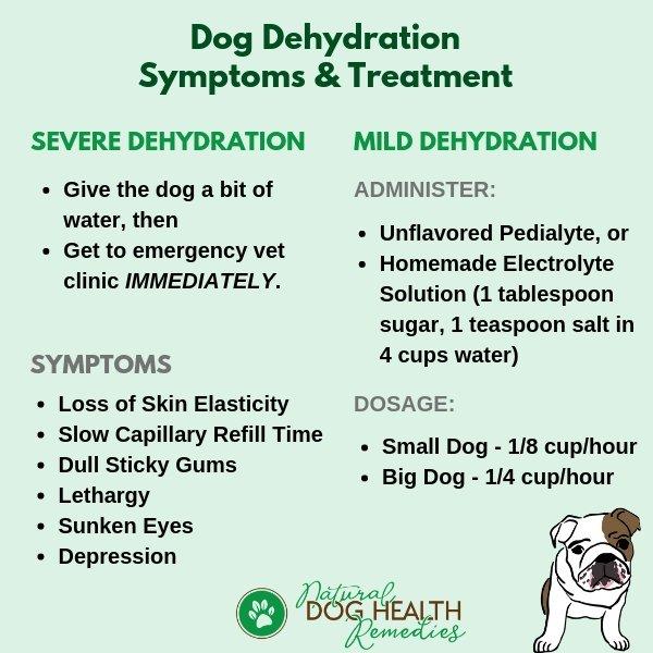 Dog Dehydration Symptoms & Treatment