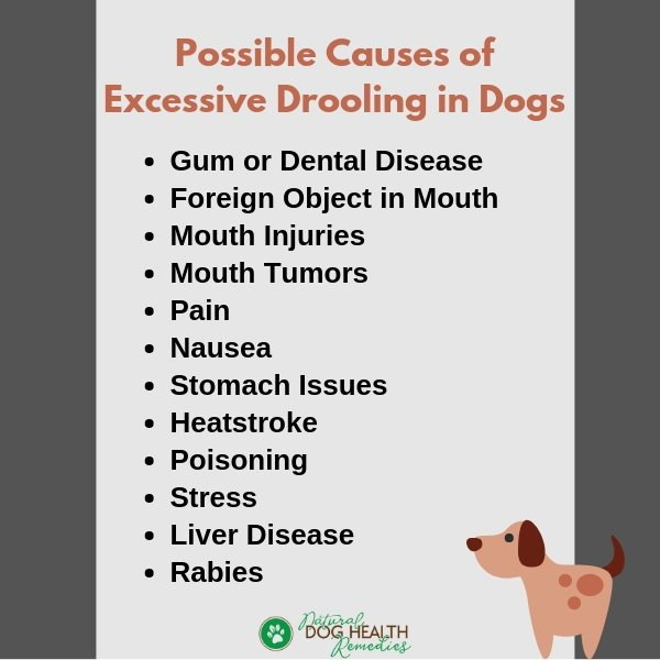 Causes of Excessive Dog Drooling