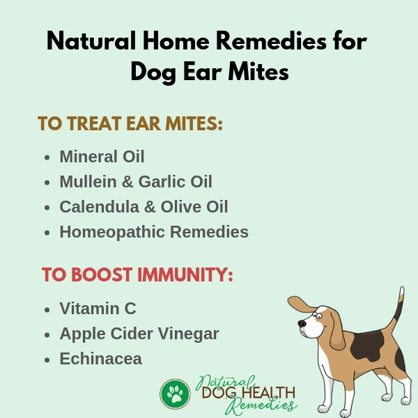 Home Treatment for Dog Ear Mites
