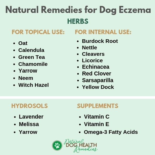 How To Treat Dog Eczema Naturally