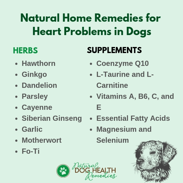 Natural Remedies for Dog Heart Problems