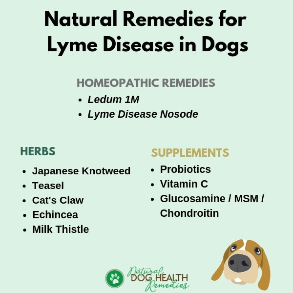 Natural Remedies for Dog Lyme Disease