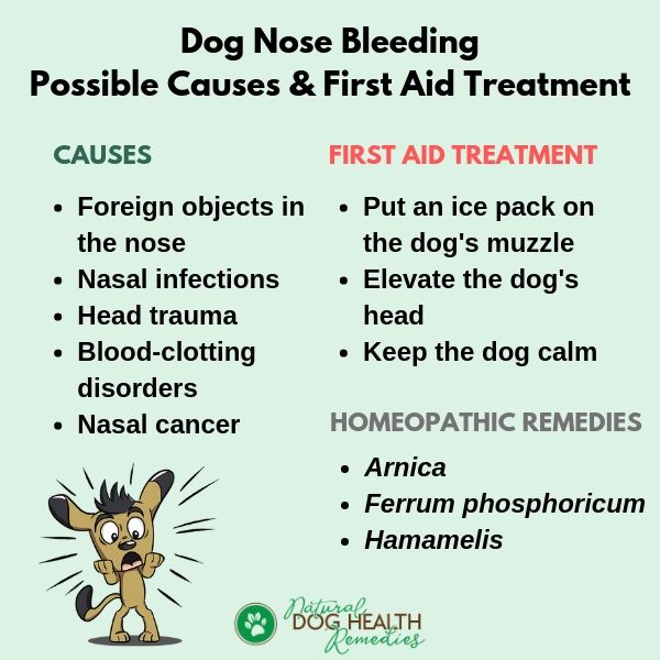 Dog Nosebleeding Causes & First Aid Treatment