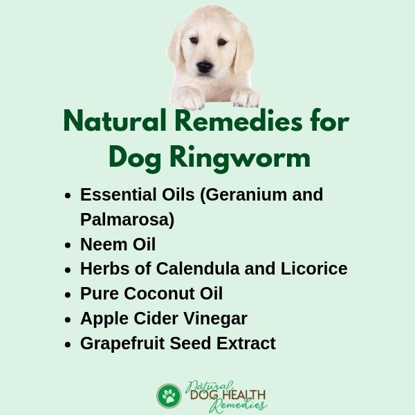 Natural Remedies for Dog Ringworm
