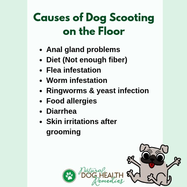 Dog Scooting Causes