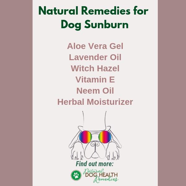 Dog Sunburn Natural Treatment