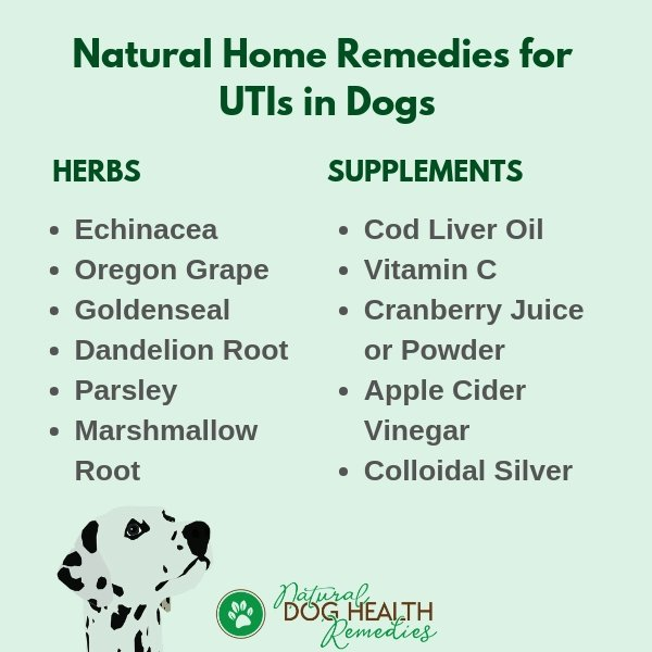 Dog UTI Home Remedies