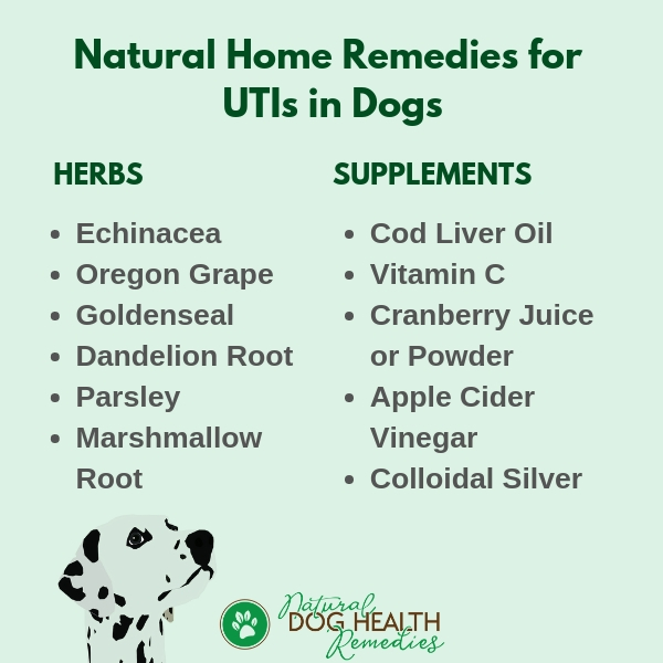 Dog UTI Home Remedies