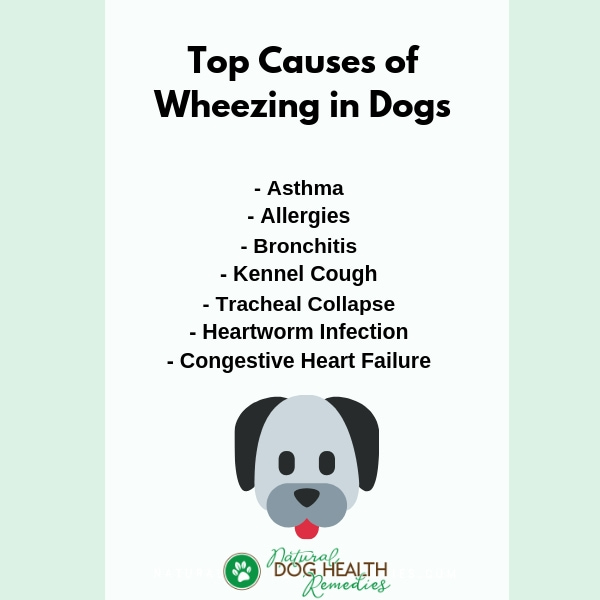 Causes of Dog Wheezing