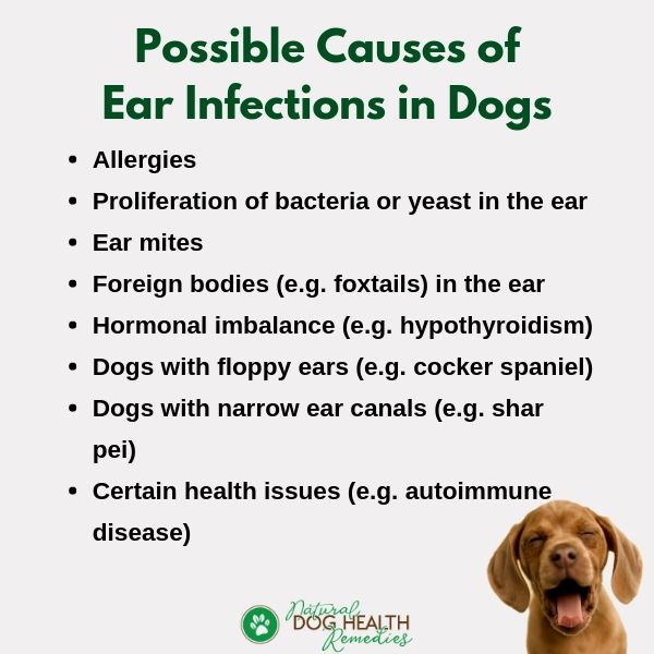 Dog Ear Infection Causes